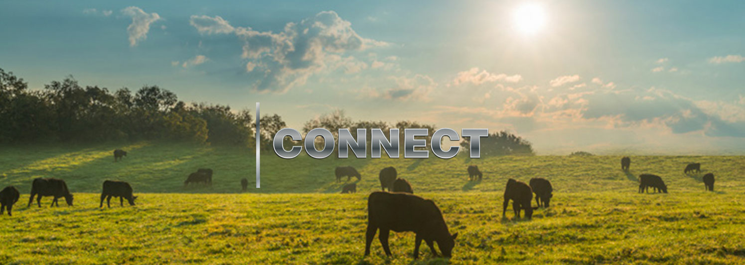connect-banner-overlay-cows